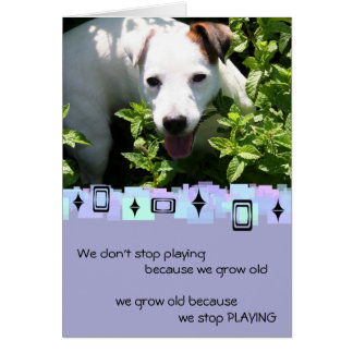 Jack Russell Birthday Greetings Card