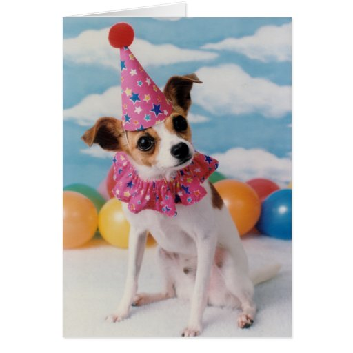Jack Russell Dog Birthday Card