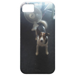 Jack Russell dog iPhone SE/5/5s Case