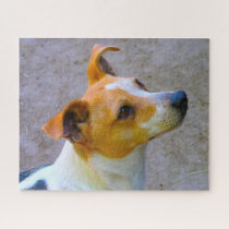 Jack Russell Dog. Jigsaw Puzzle
