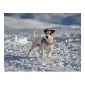 Jack Russell Dog on Ice Postcard