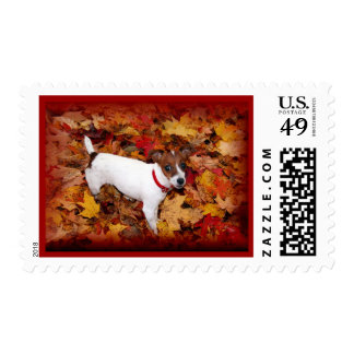 Jack Russell Fall Postage Stamps