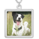 Jack Russell Grimpola Personalizada