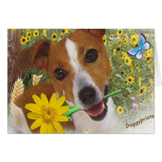 Jack Russell in Daisies Card
