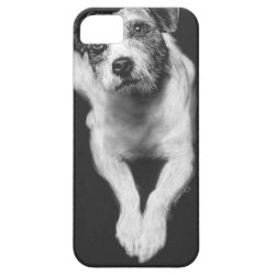 Jack Russell iPhone SE/5/5s Case
