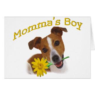 Jack Russell Momma's Boy