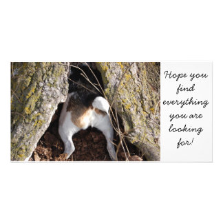 Jack Russell Note Cards