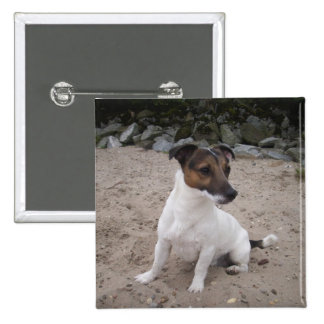 Jack Russell perro pequeño Pin
