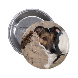 Jack Russell perro pequeño Pins
