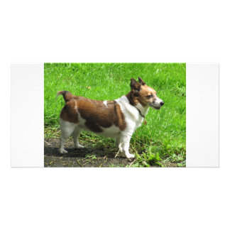 Jack Russell Photo Greeting Card