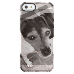 Jack Russell Portrait Clear iPhone SE/5/5s Case