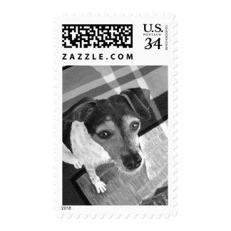 Jack Russell Portrait Postage