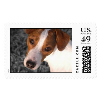 Jack Russell Postage Stamps