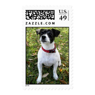 JACK RUSSELL STAMPS