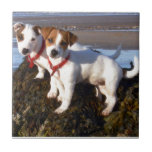 Jack Russell Puppies Tile
