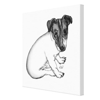 Jack Russell puppy 10 weeks old Canvas Print