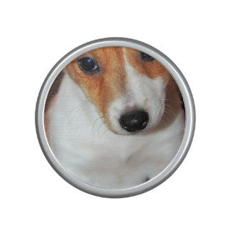 Jack Russell Puppy Speaker
