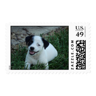 Jack Russell puppy postage