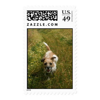 Jack Russell Puppy Stamp