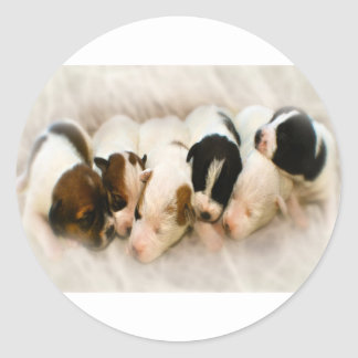 jack russell pups classic round sticker