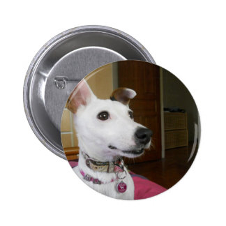 Jack Russell Terier Button