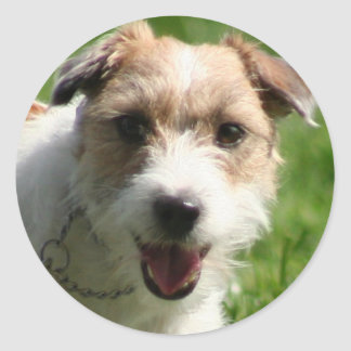 Jack Russell  Terrie stickers