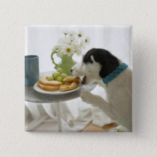 Jack russell terrier. 2 button