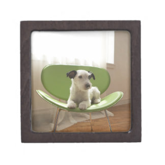 Jack russell terrier. 2 gift box
