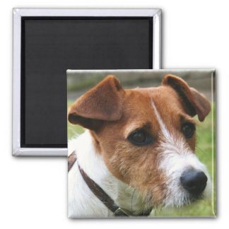 Jack Russell Terrier 2 Inch Square Magnet