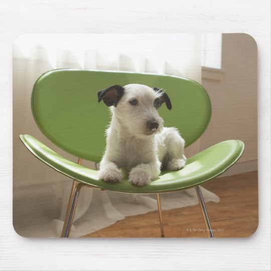 Jack russell terrier. 2 mouse pad
