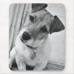 Jack Russell Terrier Alfombrilla De Ratón
