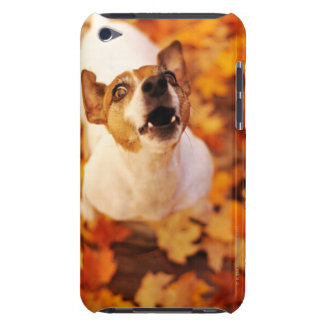 Jack Russell Terrier barking and jumping, Autumn Case-Mate iPod Touch Case
