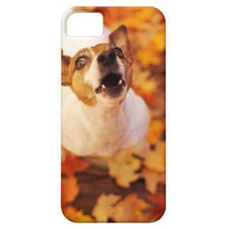 Jack Russell Terrier barking and jumping, Autumn iPhone SE/5/5s Case