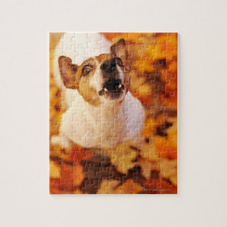 Jack Russell Terrier barking and jumping, Autumn Jigsaw Puzzle