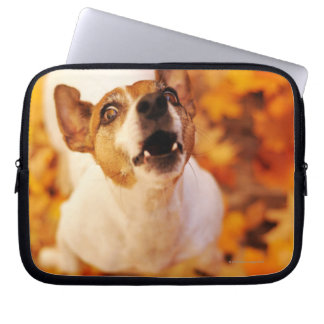 Jack Russell Terrier barking and jumping, Autumn Laptop Sleeve