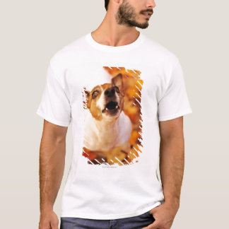 Jack Russell Terrier barking and jumping, Autumn T-Shirt