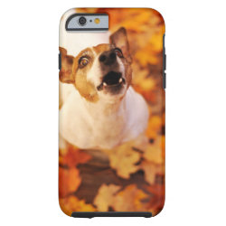 Jack Russell Terrier barking and jumping, Autumn Tough iPhone 6 Case