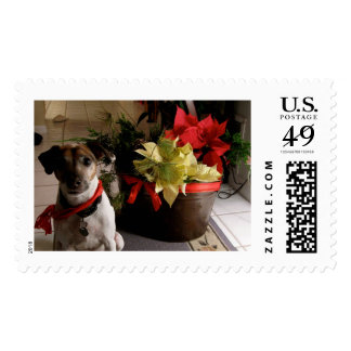 Jack Russell Terrier Christmas postage stamp