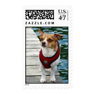 Jack Russell Terrier Cross in vest Postage Stamp