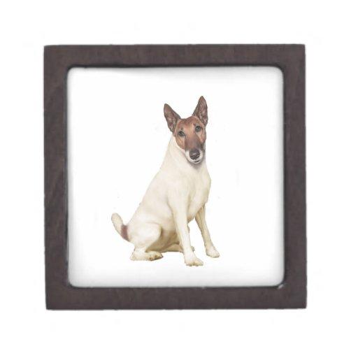 Jack Russell Terrier (d) Caja De Joyas De Calidad