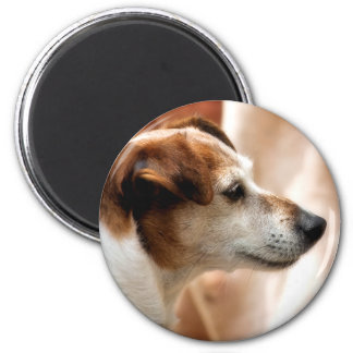 JACK RUSSELL TERRIER DOG 2 INCH ROUND MAGNET