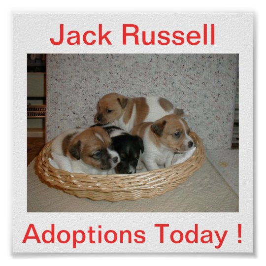 Jack Russell Terrier Dog Adoptions Today Sign
