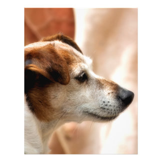 JACK RUSSELL TERRIER DOG FLYER