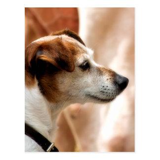 JACK RUSSELL TERRIER DOG POSTCARD