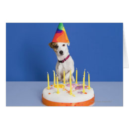 Jack russell terrier party gifts on zazzle jack russell terrier dog wearing party hat card bookmarktalkfo Image collections