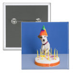 Jack Russell Terrier dog wearing party hat Pinback Button