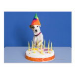Jack Russell Terrier dog wearing party hat Postcard