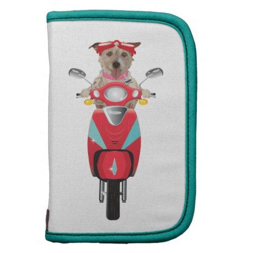 Jack Russell Terrier en el ciclomotor rojo Organizador