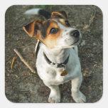 Jack Russell Terrier en hoja del pegatina de