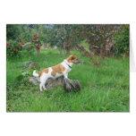 Jack Russell Terrier en roca Tarjeta De Felicitación